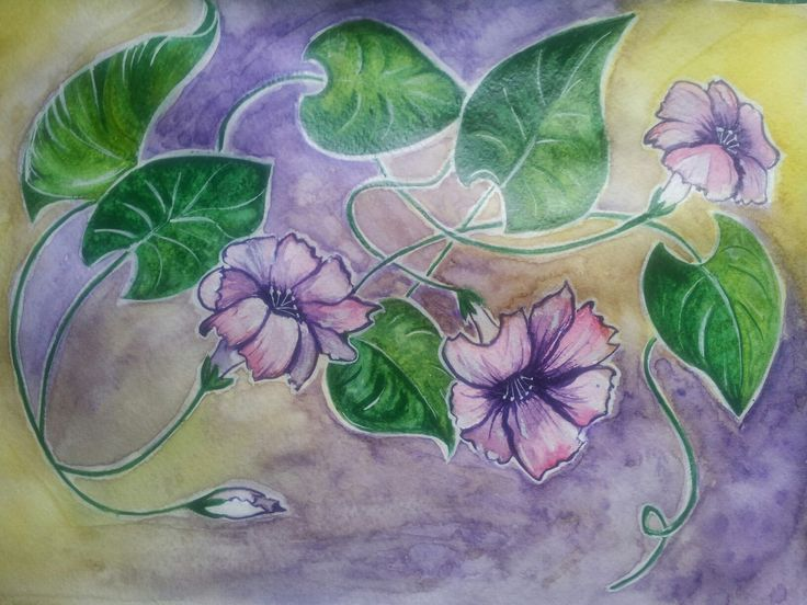 #watercolour #bindweed
