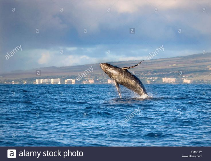 images about Whales na Pintereste Belle Delfíny a Veľryby
