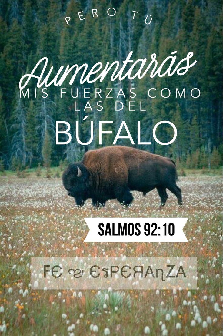 Pero Tú aumentarás mis fuerzas como las del Búfalo salmo 92:10