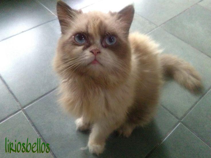 #MyCatSherlock #sweet cat #Cat #photography  #fromCostaRica   #friendship #love