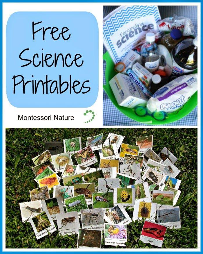 Montessori Nature: Free Science Printables. (KLP Linky Party)