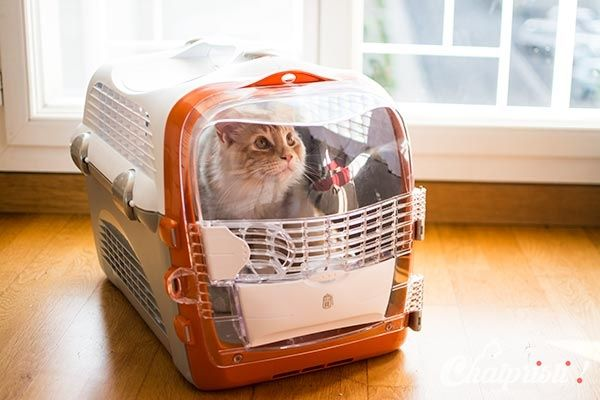 quel sac de transport pour mon chat pet cargo cabrio 2 pour maine coon soft kitty. Black Bedroom Furniture Sets. Home Design Ideas