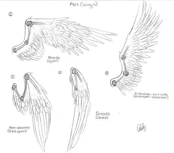 Wing's turorial...kind of by Calizaa.deviantart.com on @deviantART