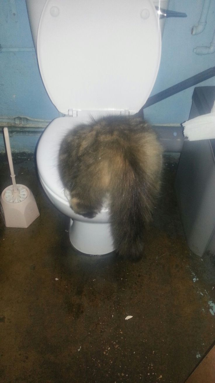 I wish the cat would stop drinking out the toilet