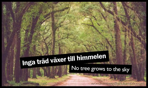 Inga träd växer till himmelen