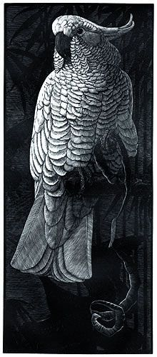 Cockatoo by Charles F. Tunnicliffe