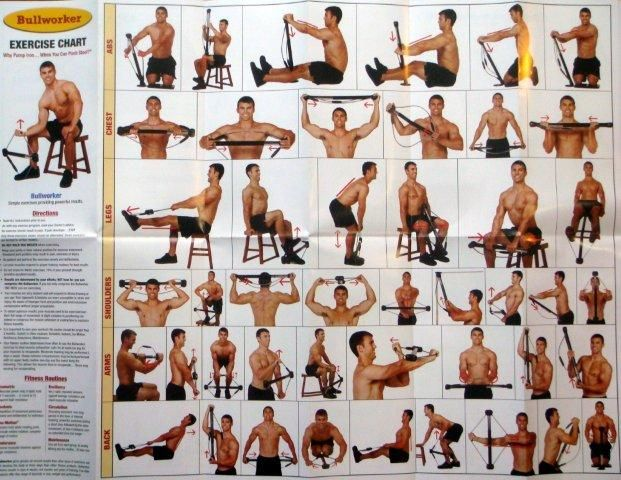 Canine Muscle Chart Manual Guide