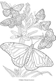 Detailed Coloring Pages For Adults | free printable adult Butterfly Coloring Page