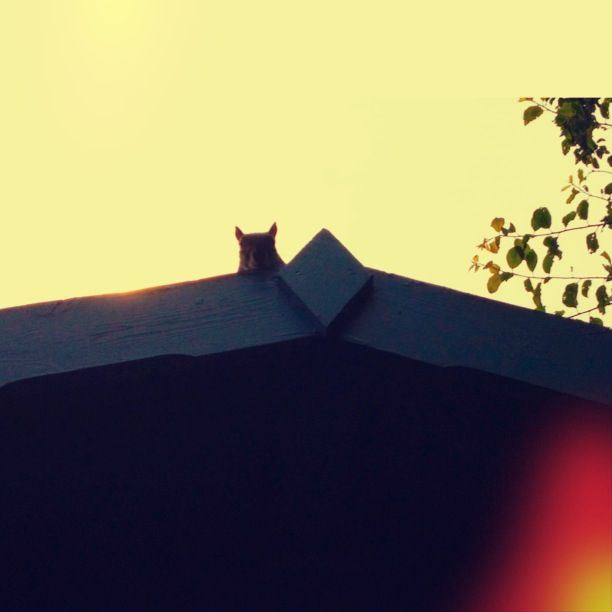 But, as the sun sets, and the Midwich Cuckoo lights begin to dance, who's this crawling along The Literary Shed's roof? Every move is agony but John Barry is determined to make it to the edge of the roof, where he can rest and watch and work out how to get Django Reinhardt out of there. You never leave a man (or cat) behind. He freezes. Behind  him, he hears whistling, the tune familiar. It's 'Twisted Nerve'. He closes his eyes and waits to see what will happen next.