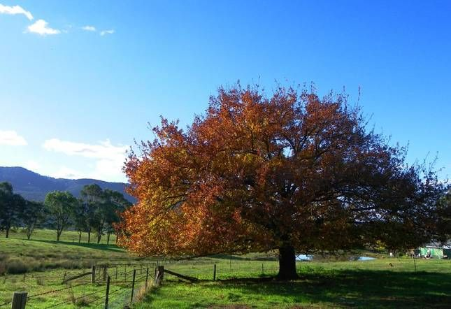 Sweetwater Stays Rural Retreat | Beechworth, VIC | Accommodation - about 20 mins from Beechworth but cheap & has enough room for 5ppl