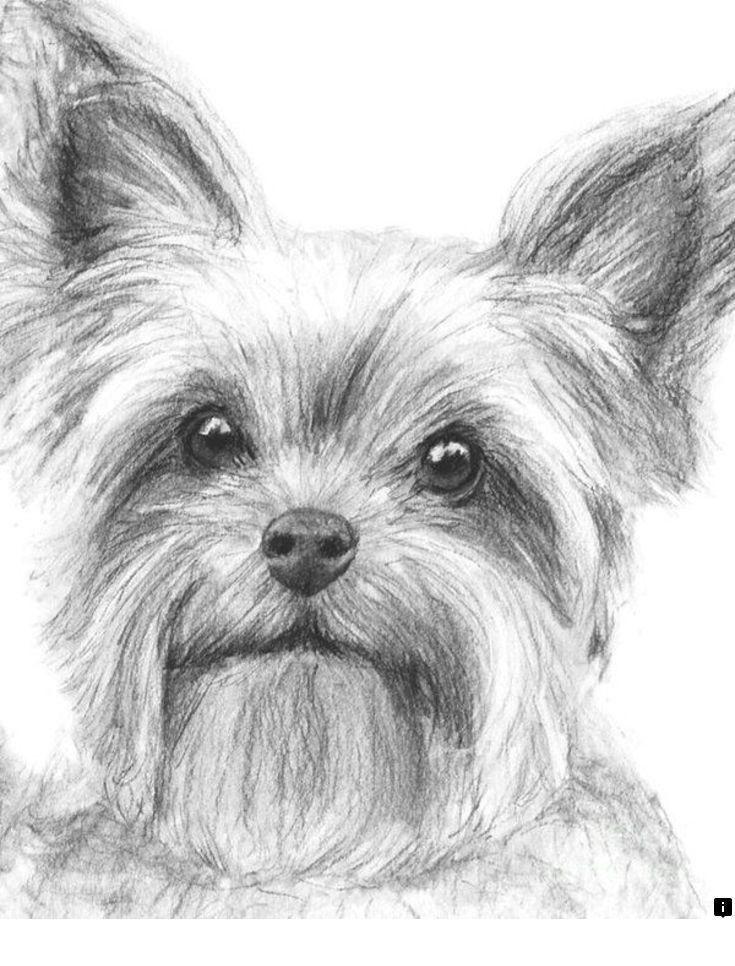 Картинки йорка щенка для срисовки, открытки
