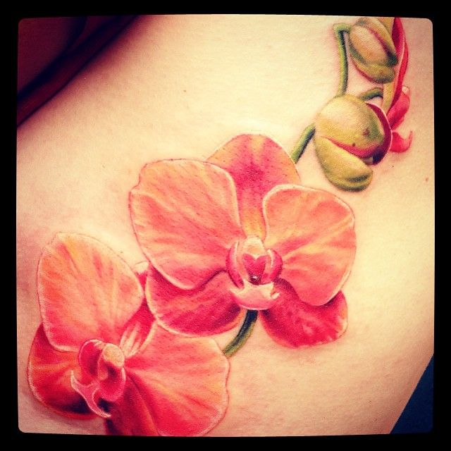 Ber ideen zu tattoo orchidee auf pinterest kirschbl ten tattoo schmetterling tattoo - Orchideen tattoo vorlage ...