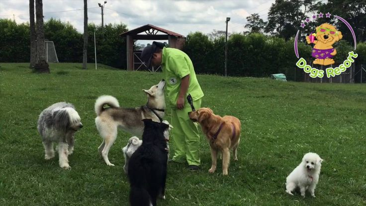 Un día en Dogs Resort es... DIVERSIÓN