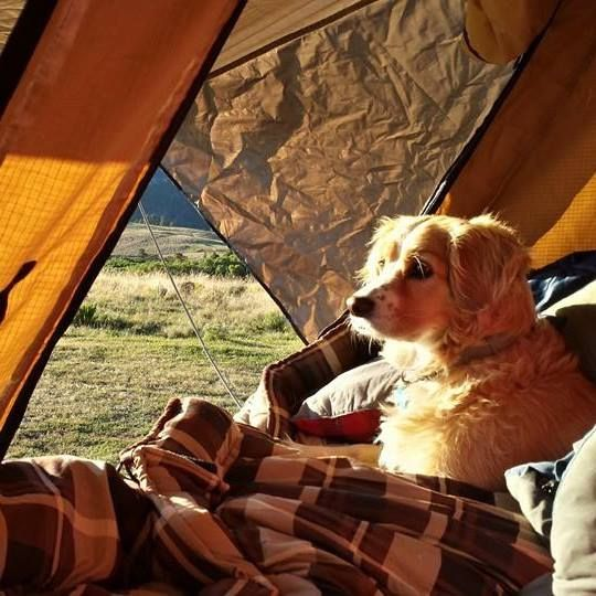 Dogs and a CVT Roof Top Tent!