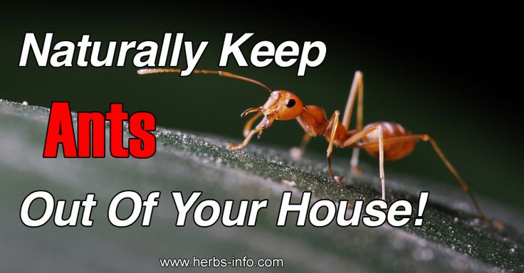 Top 16 Natural Ways To Get Rid Of Ants►►http://herbs-info.com/blog/top-16-natural-ways-to-get-rid-of-ants/?i=p