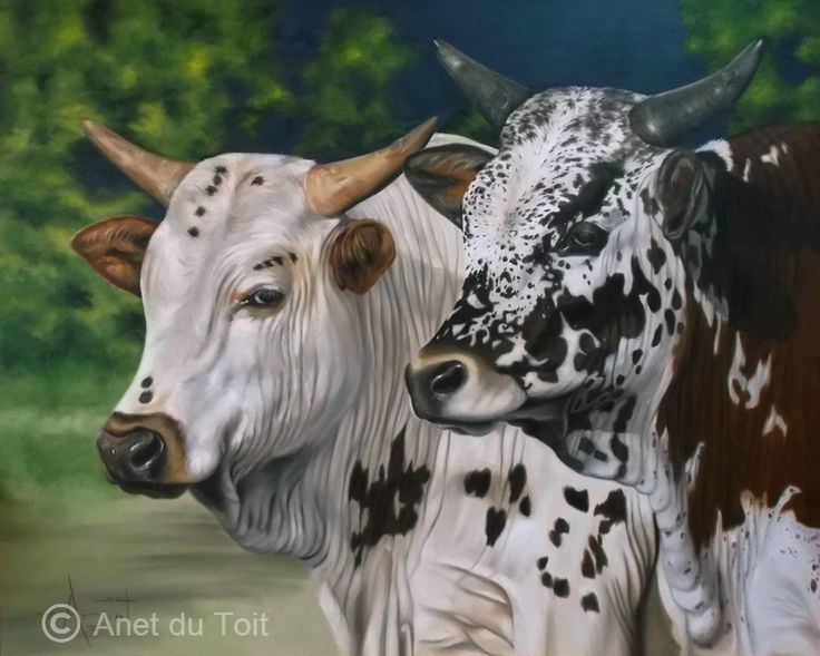 Nguni's 1,5m x 1.2m Oil on canvas SOLD