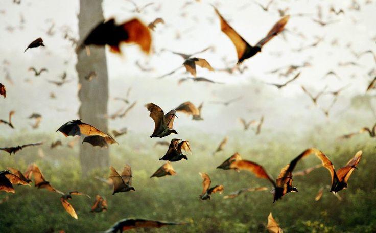 Восхититесь полетом 5 млн мышей - https://www.sribno.com/ranking/voshitites-poletom-5-mln-myshej.html