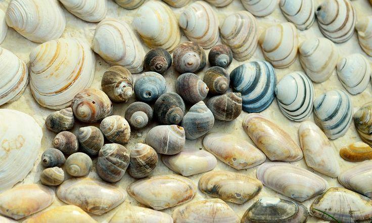 Бесплатные фото на Pixabay - Моллюски, Пляж, Улитки, Море ...
