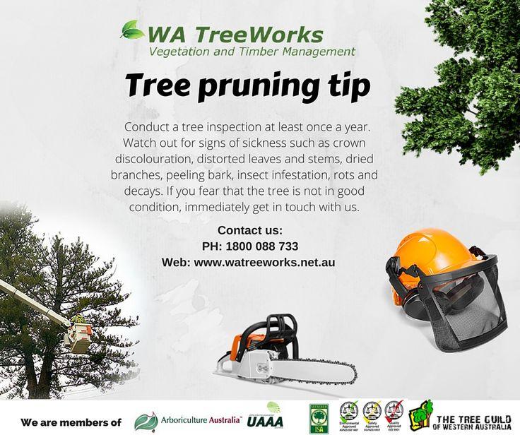 WA TreeWorks tree pruning tips: