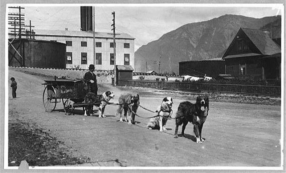 C.1918 Alaska Dog Team used to Deliver by InterestingPhotos, $7.95
