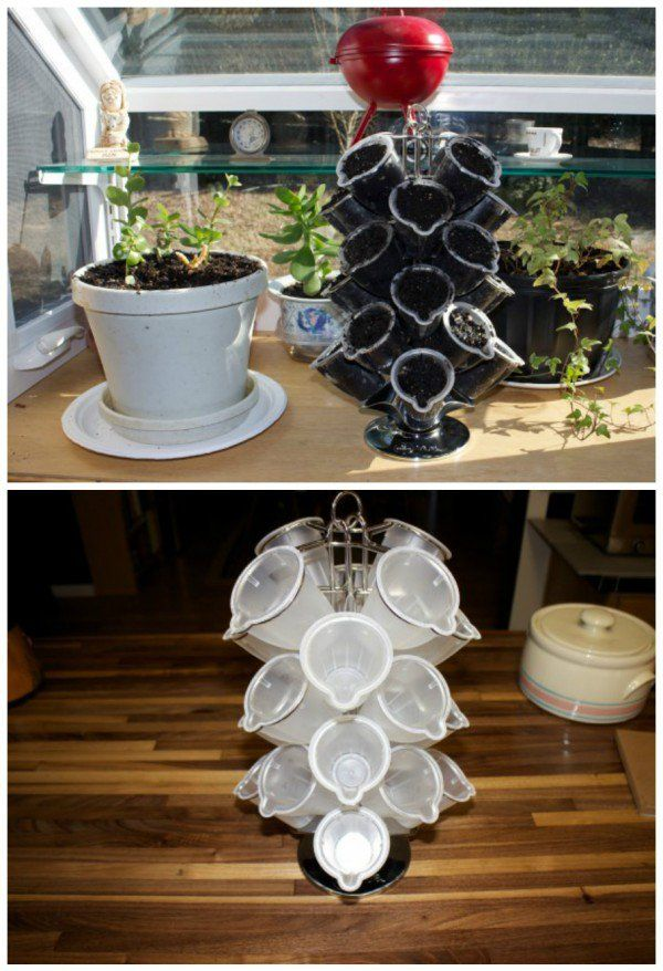 caps, coffee, garden, indoor, planter My background is very eclectic. My interest range from cuckoo clock repair to artisan bread. But my two favorites are repurposing everyday items into unexpected uses and growing fresh herbs. Fresh herbs add so much flavor to any and every dish,