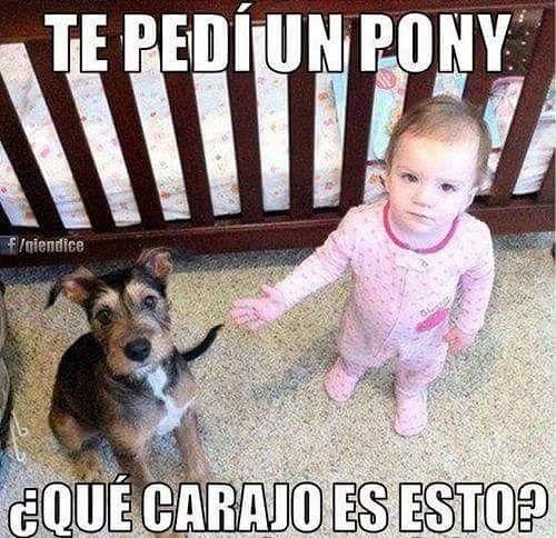 Es un pony PENDEJA. Y si no te gusta ve My Little Pony puta >:v