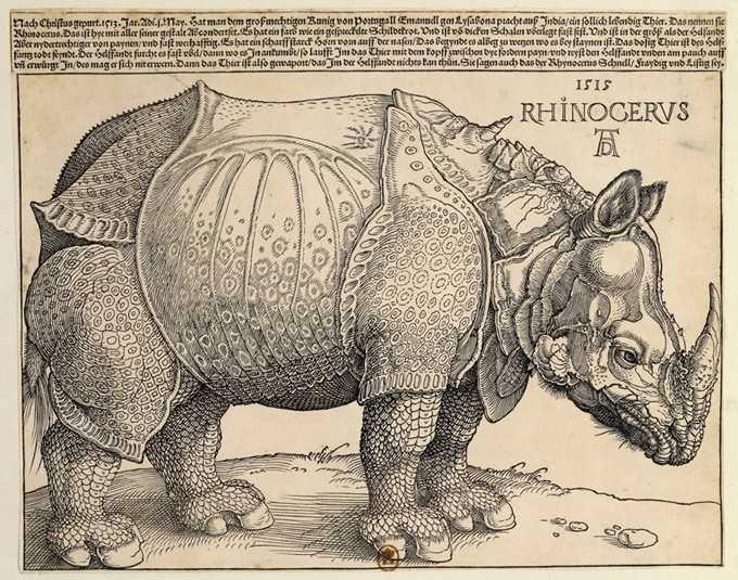 'Rhinocéros'    Alberto Durero realizó su famoso grabado del rinoceronte en 1515. El pintor nunca había visto un rinoceronte, ni nunca lo vería