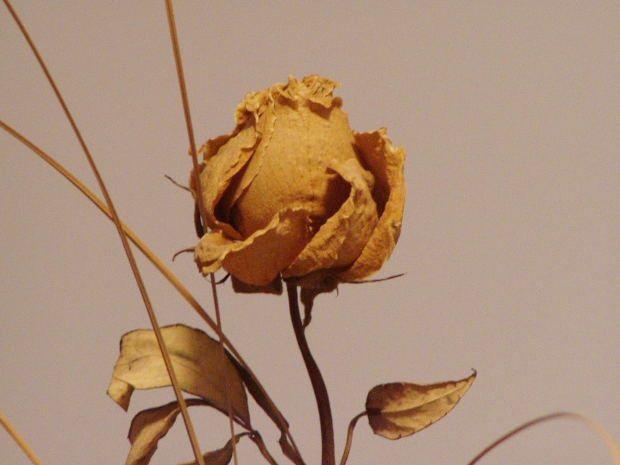 Tips 1: Hvordan å tørke roser