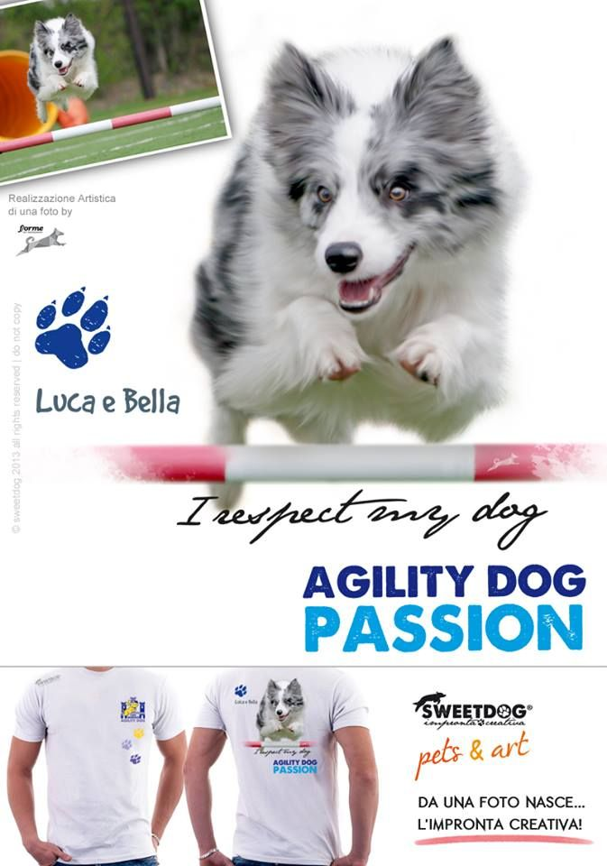 DOG: Bella (Border Collie Blue Merle) | Agility Dog Personalized T-Shirt | T-Shirt personalizzata Agility Dog | https://www.facebook.com/SweetDogStore