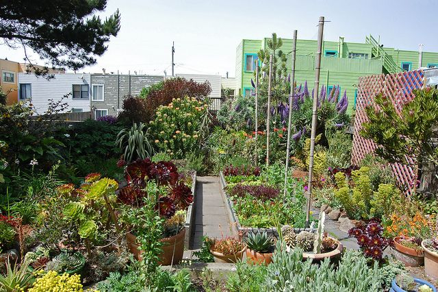 Incredible garden in SF using native plants, with edible bed in the middle. Photo by FarOutFlora.