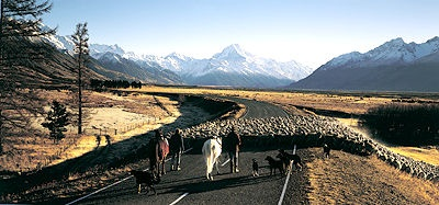 Mount Cook Sheep Mustering by Andris Apse. Classic Glentanner shot!