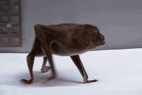 Walking bat gif.