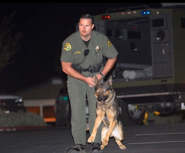 Placer County Sheriffs Deputy and K-9