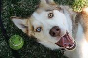 Dog behavior advice ASPA
