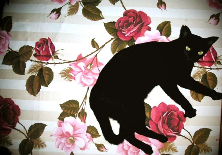 .Cat Art, Cat Photography, Chat Noir, Hasisi Parks, Black Cats, Kitty Art, Floral Cat, Cat Black, Black Cat