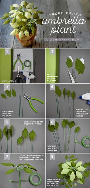 Planta de papel