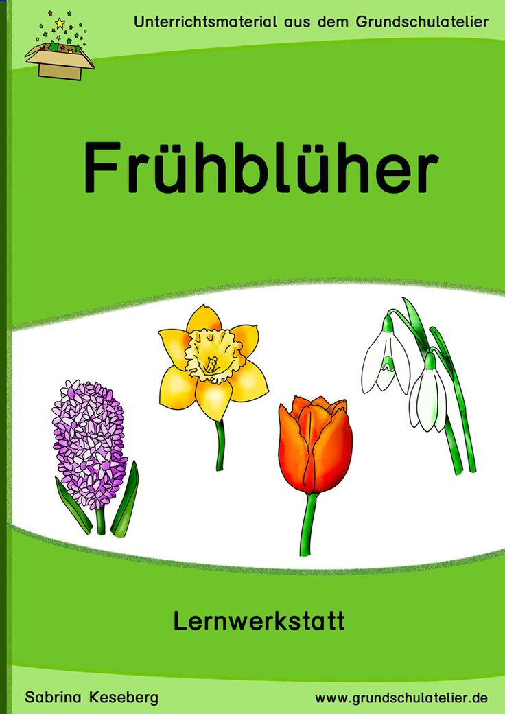 Unterrichtsmaterialien für den Sachunterricht (3-fach differenziert): Arbeitsblätter und Lernspiele zum Thema Frühblüher (Frühjahrsblüher, Frühlingsblüher): Tulpe, Narzisse, Schneeglöckchen, etc. 94 Seiten, pdf-Format, Klassen 1-4