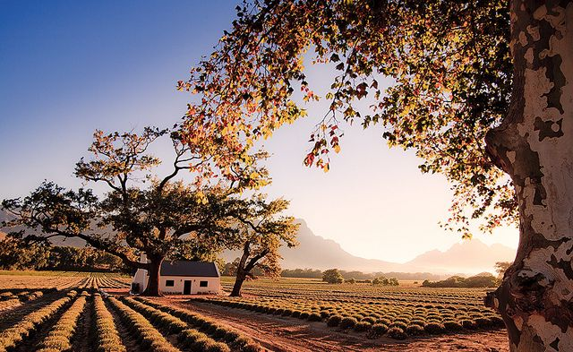 Franschhoek is a village in the Western Cape of South Africa, famous for its' fine wine and award winning resturants.