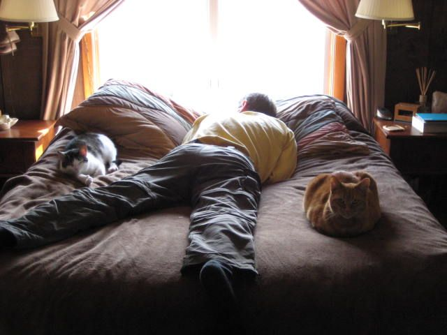 Cat nap with Pi, Billie Jo, and my guy...