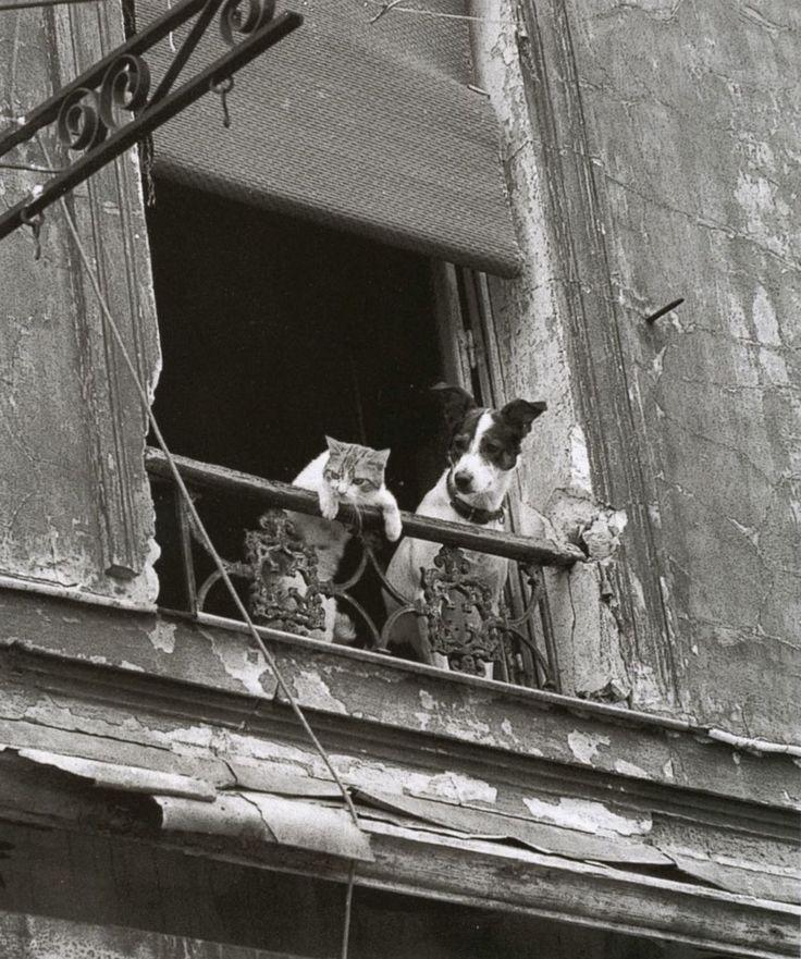 Neighbourhood watch (Annick Gérardin).