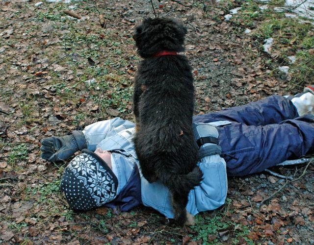 zeigt der Hund Dominanz?