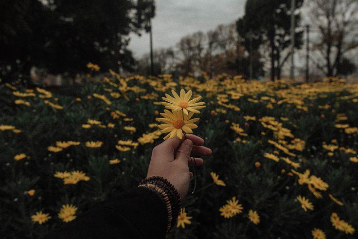 100 photos esthétiques Hd à télécharger gratuitement des Images sur des fleurs Unsplash …   – Aesthetic