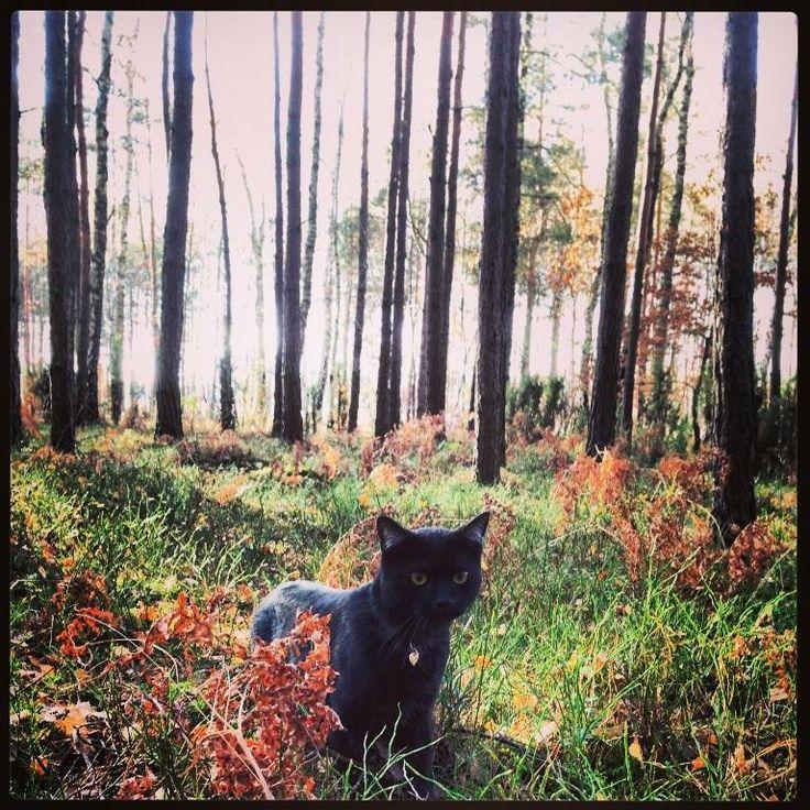 czarek in the forest ;)