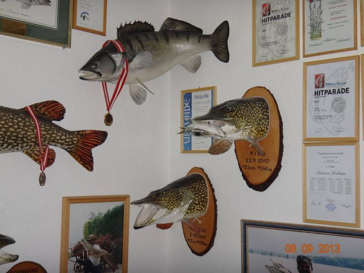 14 Best Fish Taxidermy Images On Pinterest Fishing