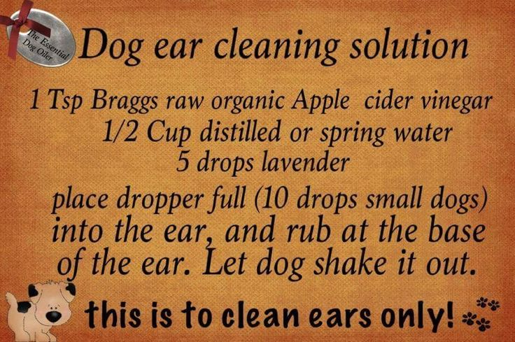 Essential Oils: Dog Ear Cleaning Solution (Taken from Essential Oils for Pets Distance Learning on Facebook).