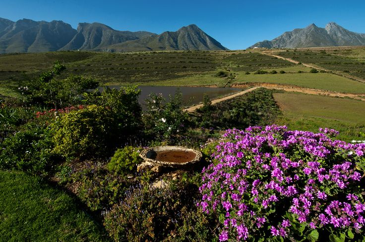 Some Of The Stunning Views At Vreda Vallei Self Catering  Eco Green Farm Swellendam Cape Town