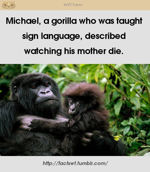 For more please check out http://www.seriouslyfacts.me/