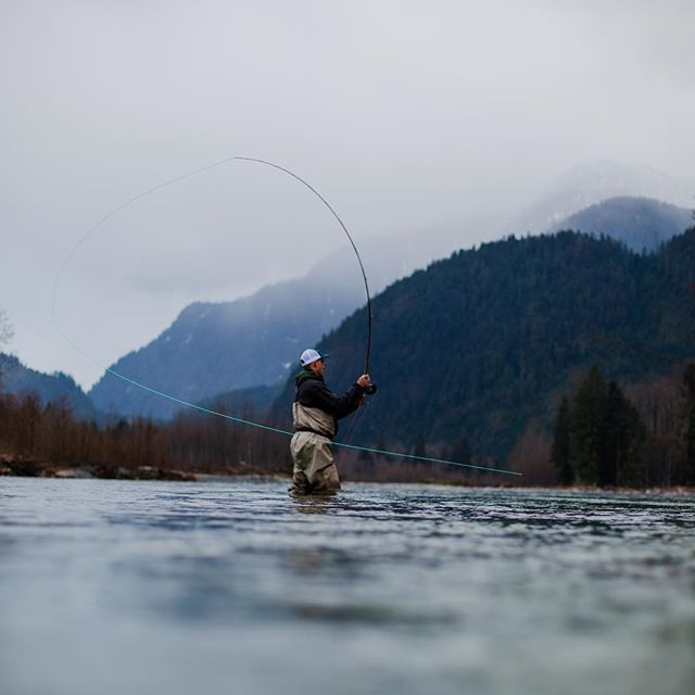 The steelhead are in and so are we. Come fish with us on the #pittriver #pittriverlodge #flyfishing #gooutside #vancouver #catchandrelease
