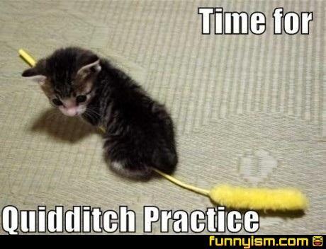 Draco Meow-foyCat, Funny Animal Pics, Harry Potter Funny, Harrypotter, Kittens, Harry Potter Humor, Kitty, Funny Harry Potter, Quidditch Practice