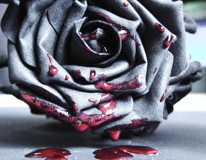 20 best images about bleeding rose on Pinterest | Rose ...